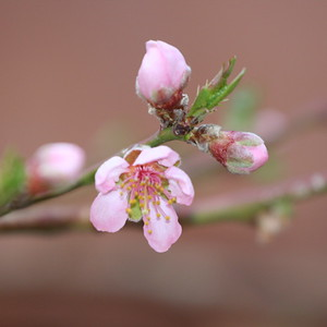 First blossoms of spring in Santa Fe