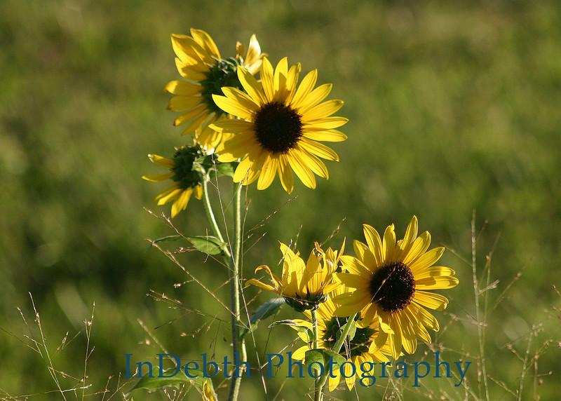 4148 - Wild Flowers