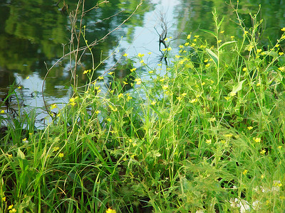 Wild flowers by pond