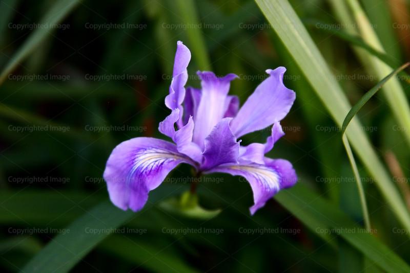 CRay-Flowers-6848