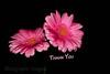 Pink Hybrid Cultivars,