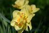 1558 - Flower