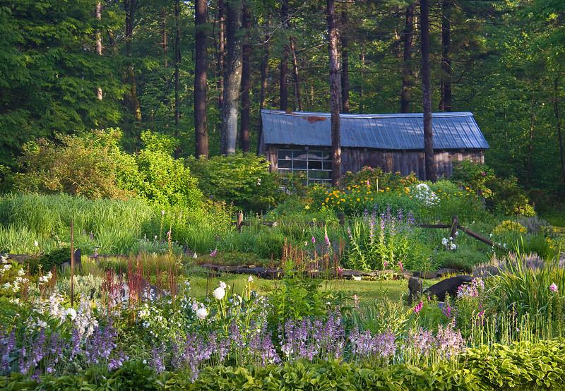 Morning light on a flower garden