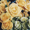 Yellow and green roses