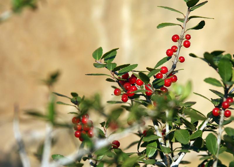 0614 - Red Berries