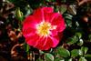 CRay-Flowers-6868