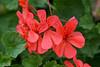 CRay-Flowers-0735