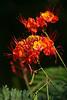 1651 - Flowers