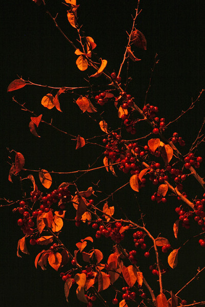 NightLeafs_2_2669