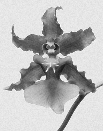 Flower_0405
