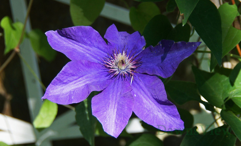 July 2011 flower in NH