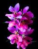 flowers-301sm