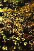 CRay-Flowers-0012