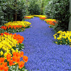 River Of Colour  Kerkenhof Holland