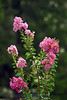 7546 Austin flower