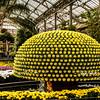 Chrysanthemum Festival @ Longwood