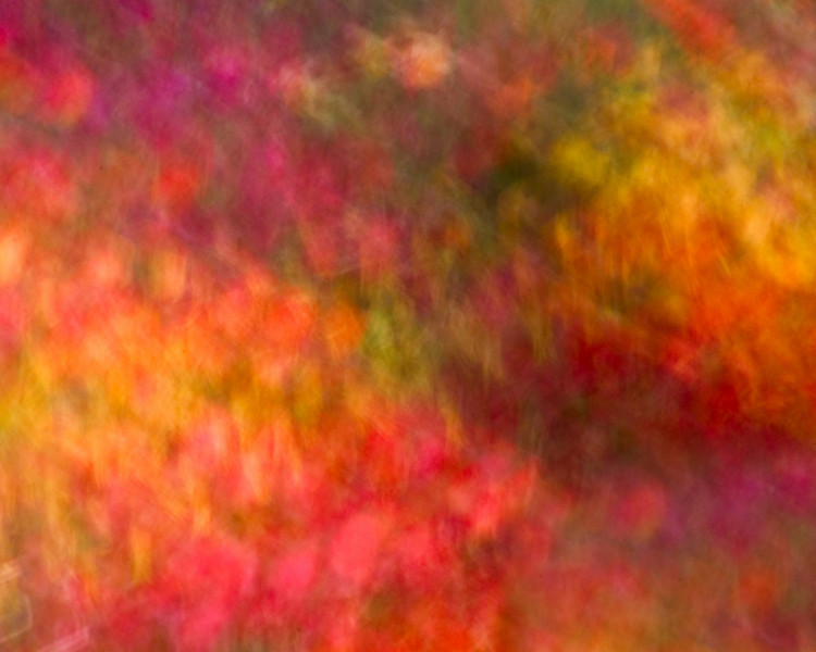 Abstract Tulps