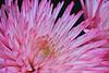 flowers-206sm