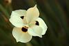 2060 - Flower