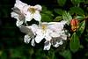 CRay-Flowers-6938