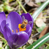 Spring Flowers - March 09-9
