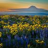 Mt. Adams at Sunset