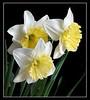 Spring Garden (77173900)