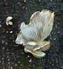 Mushroom growing on a tree in Pioneer Park on Mercer Island, Washington