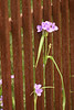 0982 - Flowers