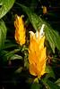CRay-Flowers-0638