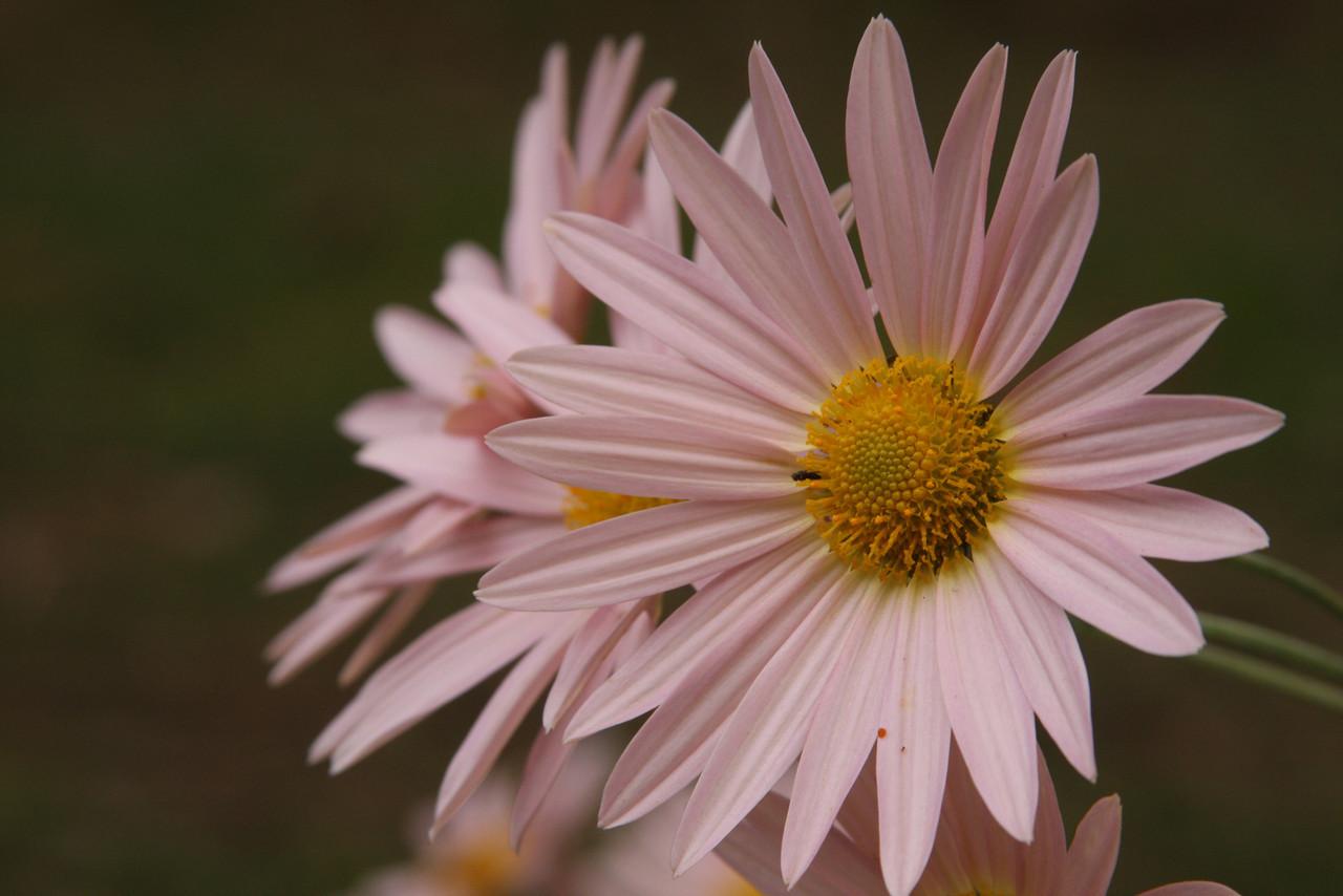 IMG4_22249 Flowers