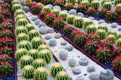 color cactus garden 9134