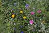 Flowers_MG_4420 copy