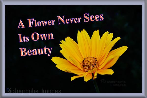 Beauty, Flower