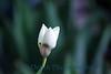 1517 - Flower