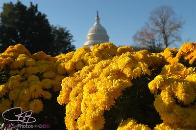 Mums the word in Washington