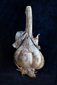 My Garlic Reigns!  This is a multiple image focus series.