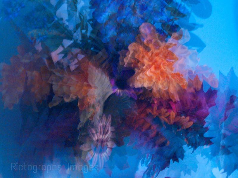 Lens Blur Flowers