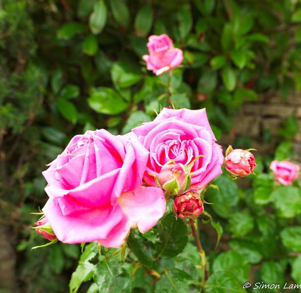 Avignon_2012 06_4493189