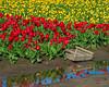 Skagit County, WA tulip field