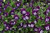 CRay-Flowers-0785