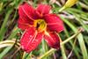 Flowers_MG_4412