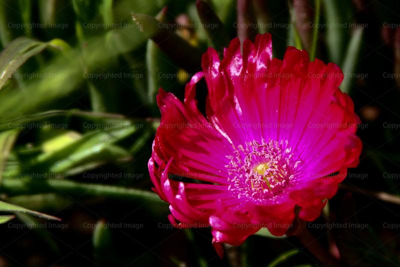 CRay-Flowers-6861