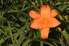 Flower_MG_4088