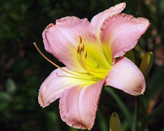 Scorton Creek Gallery-flowers