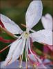 little pink flower dew 216 crop