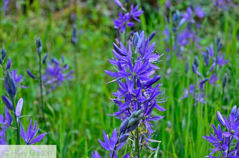 Camassia Nature Area - West Linn Oregon - 185