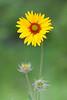 flower smugmug (18 of 26)