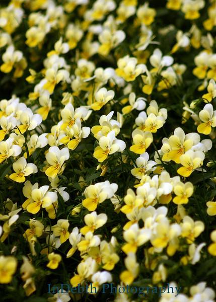 7353 - Atlanta Flowers