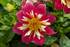 20060904-132725_30D_Flowers_0108
